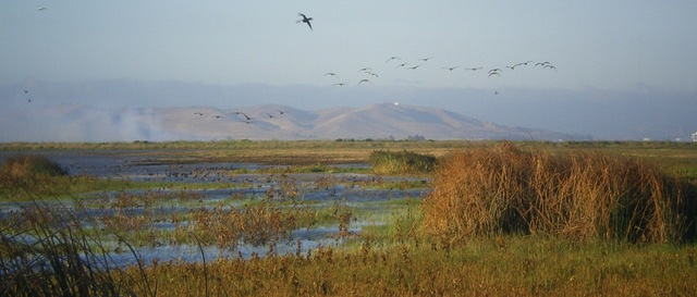 Suisun Marsh Photo by California Department of Fish and Wildlife