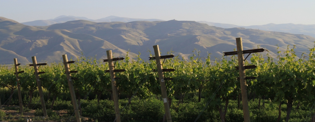 Grapevines in the San Joaquin Valley.  Photo by Chris Austin.  All rights reserved.