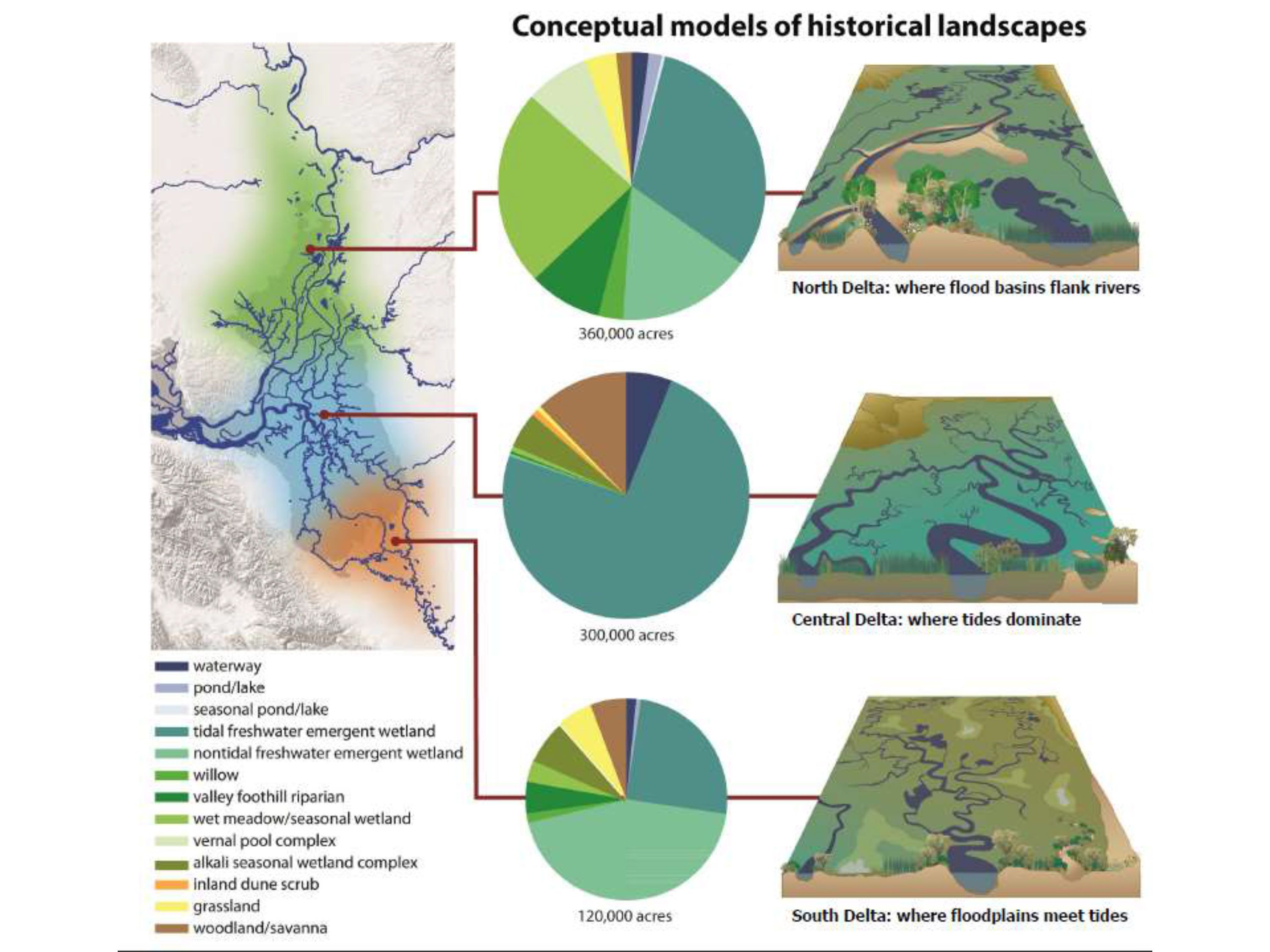 the different types and importance of wetlands Technical aspects of wetlands wetlands as bird habitat by  adapt to different wetland types,  on wetlands of international importance especially as.