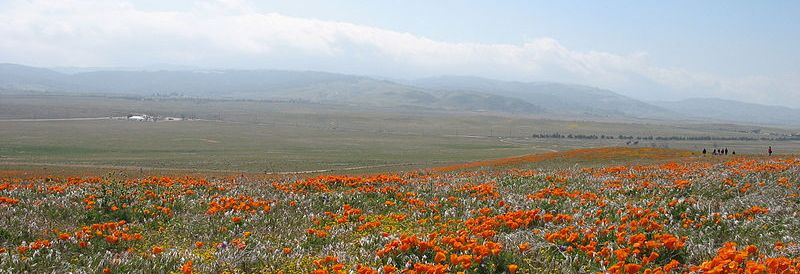 Wikimedia Antelope Valley Poppies Header
