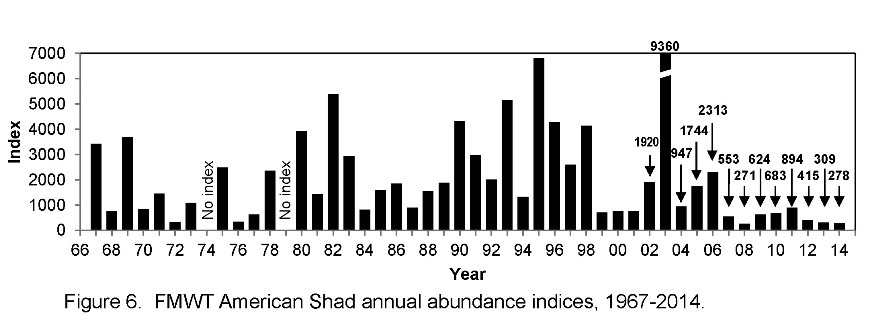 FMWT American shad index graphic