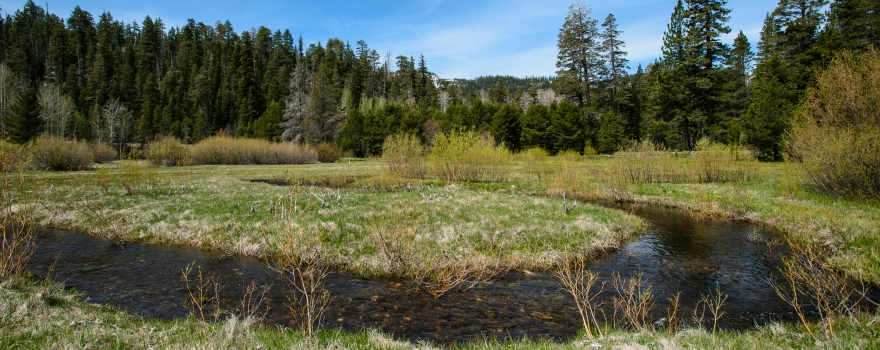 A pond and plug restored Cookhouse Meadow in the Sierra Nevada mountains on May 16th, 2014.