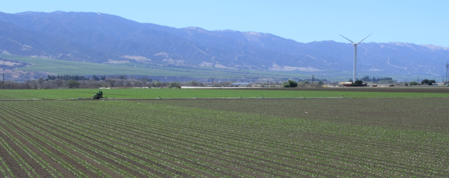 Salinas Valley Agriculture