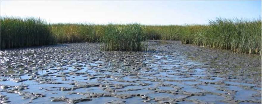Liberty Island emergent tidal marsh sliderbox